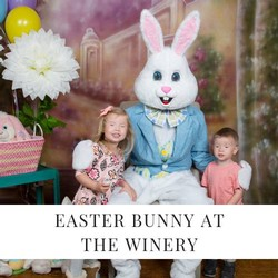 Easter Bunny Pictures Image